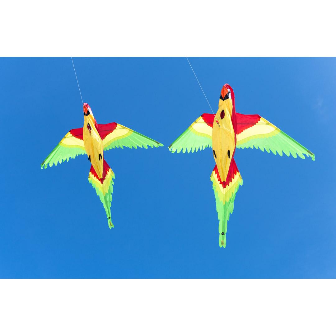 Joel Scholz 3d Kites Parrot 106514 Origamiorigami Macaw Parrotorigami Diagram Article Number